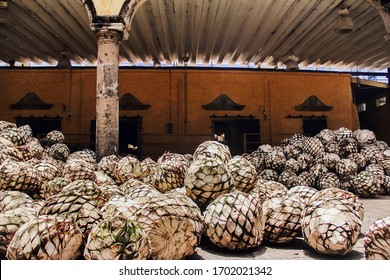 Tequila Agave in distillery waiting for processing, tequila factory Jalisco Mexico