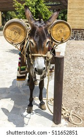 TEQUILA -JALISCO, MEXICO: JULY 2015: Donkey ready to offer a shot of tequila in Casa Herradura, Jalisco.
