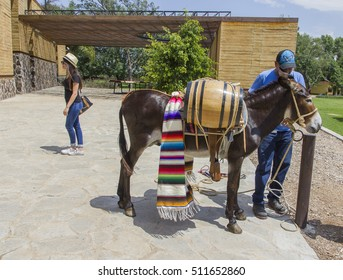 TEQUILA - JALISCO- MEXICO: JULY-2015: On the walk Casa Herradura, have this nice burrito with tequila barrels try to give the tourists.