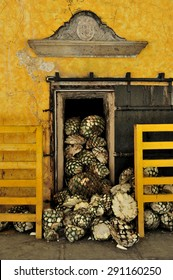 Tequila, Jalisco, Mexico  October. 8. 2013: workers loading agave to brick oven at Jose Cuervo tequila distillery, the leading company of Tequila, town of Tequila, Jalisco, Mexico