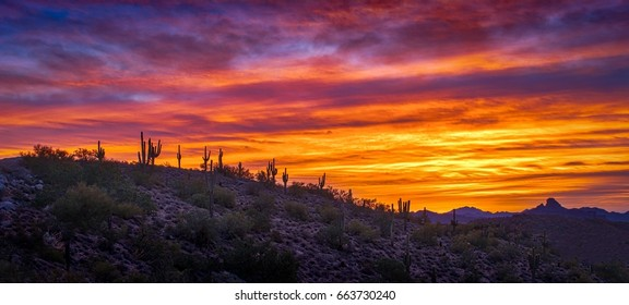 Tequila Sunrise - A blaze of orange and red tones highlight this Sonoran desert sunrise in Arizona.  Wide angle panorama landscape.