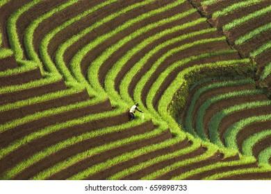 Terace of Onion Field  at Argapura, Indonesia.