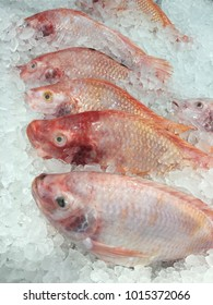 Terapia red fish on ice  in market for sale