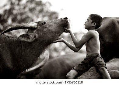 Terengganu, Malaysia - February  02 2017 : A strong bond between a young boy and his buffalo in Malaysia. The boy is well known as Malaysian mowgli for his relationship with his buffaloes.