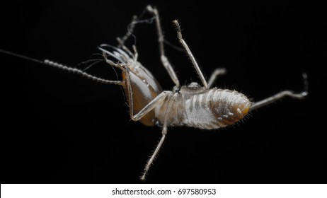 termite( Adjusts the color intensity to almost black and white.)