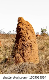 Termite Mound in a Brazilian Pasture Area