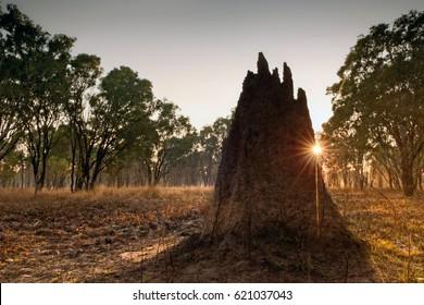 Termite mound at dawn (Nasutitermes triodae), Northern Territory, Australia