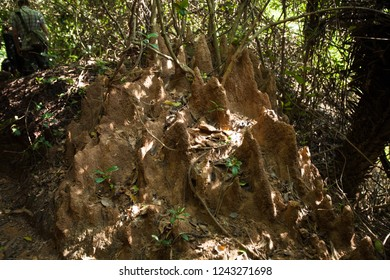Termite mound in the jungle near Arambol.