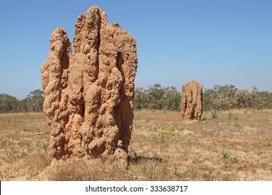 Termite Nest Images Stock Photos Vectors Shutterstock