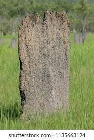 Termite Mound Northern Territory