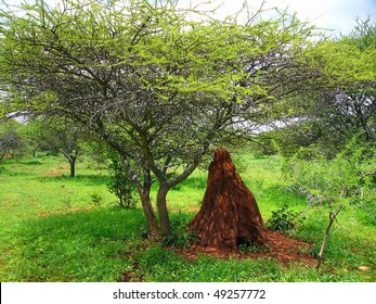 Termite mound in South Africa