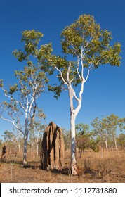 termite mound, termitarium, termites nesting in the australien outback near Darwin