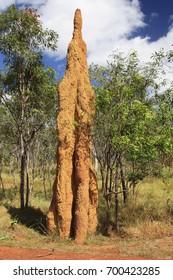 A Termite Mound in the tip of  Cape York Australia