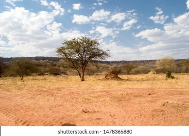 Termite mound under a tree in Africa, Namibia.