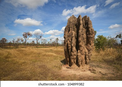 Termite mounds, Kakadu National Park, Australia
