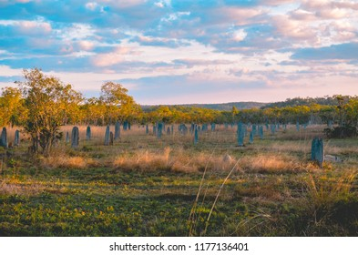 Termite mounds in the Litchfield National park during sunset