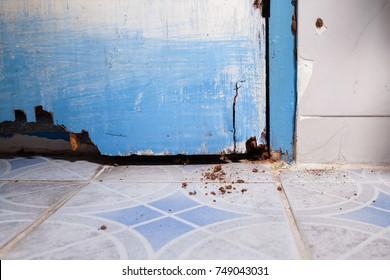 Termite nest inside wood door and jamb.