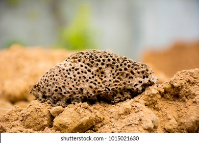 A termite nest in the soil. can use for Trypophobia concept.