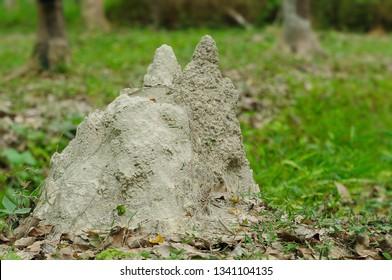 Termite nests that are present in nature