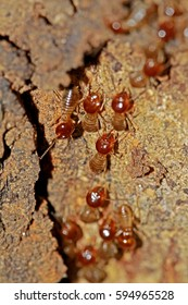 The termite on nest