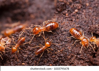 Termite workers inside the nest