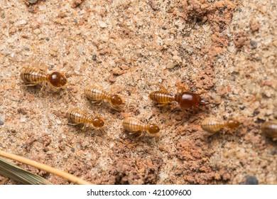 Termites help unload wood chips.