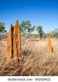 Termites in Northern territory build big mounds. Different types of termites build different shapes this one is called cathedral shape