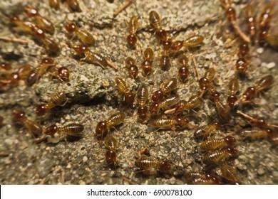 Termites work on the ground.