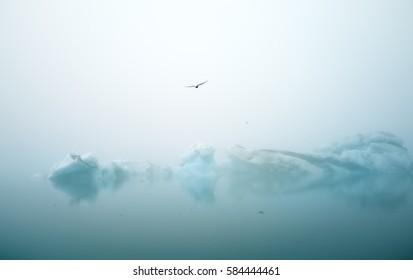 Tern birds fly over small ice bergs in jokulsarlon, Iceland