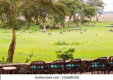 Terrace with armchairs overlooking Amboseli Park for watching animals such as wildebeest or impala