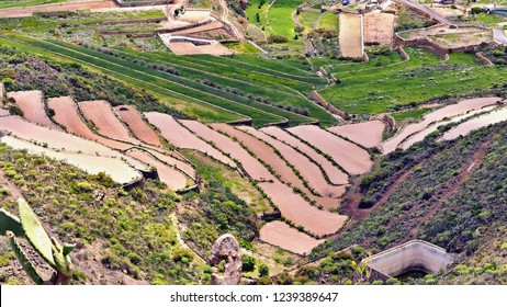 Terrace fields for vegetable cultivation in Tenerife. Freshly filled with red, iron earth and straightened, ready to plant the small plants. Siue are surrounded by fresh green terraced fields..