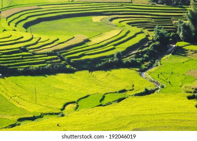 Terrace rice field in season of grain