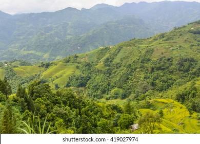 Terrace Rice Fields in Ha Giang Vietnam