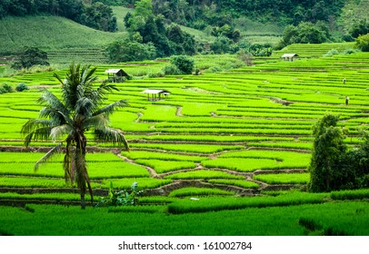 Terrace rice fields in Mae chaem, Chaing Mai, Thailand