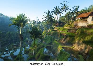 Terrace rice fields in morning sunrise, Bali, Indonesia.