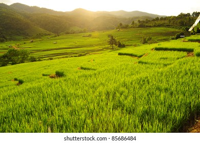 Terrace Rice Fields in Sunshine