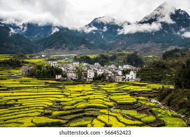 Terraced field in An'hui province with rape flowers and mountains in the cloud sea