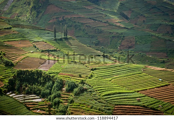 Terraced fields of Dieng plateau, Java, Indonesia