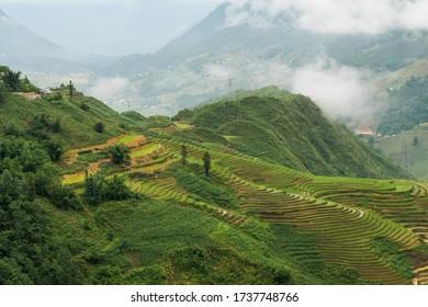 A terraced fields in Sapa Vietnam