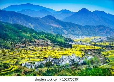 Terraced fields of Wuyuan County with Yellow oilseed rape field and Blooming canola flowers in spring. It's very quiet. People refer it to as the most beautiful village of China.
