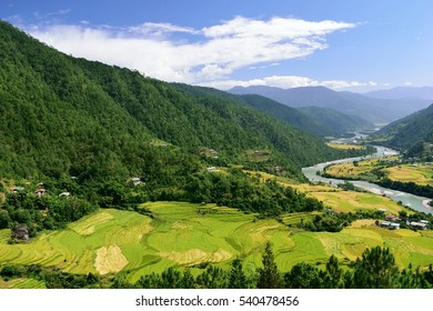 Terraced paddy fields in the Punakha valley with the Mo Chu river flowing alongside