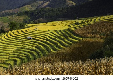 Terraced Rice Field in Chiangmai, Thailand