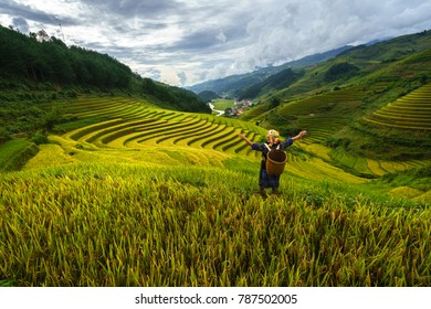 Terraced rice field in harvest season with ethnic minority woman on field in Mu Cang Chai, Vietnam.