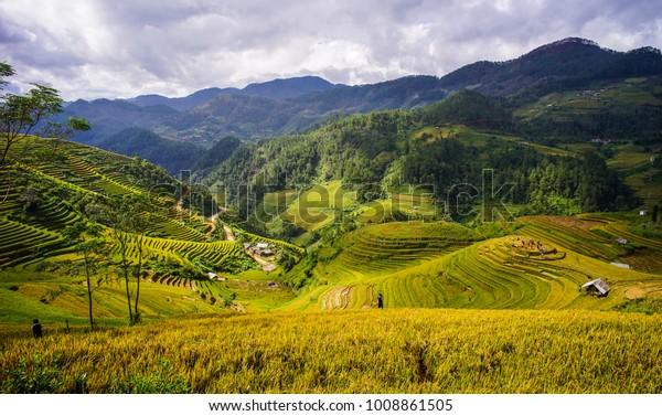 Reisfeld auf den Bergen in Mai Chau Township, Nordvietnam.