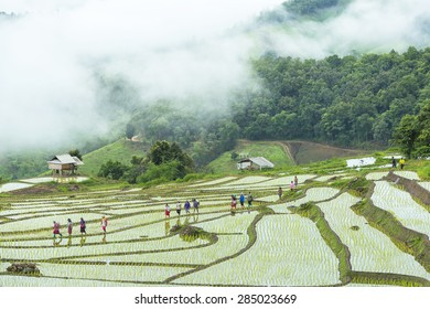 Terraced Rice Field in Pa Pong Pieng , Mae Chaem, Chiang Mai, Thailand