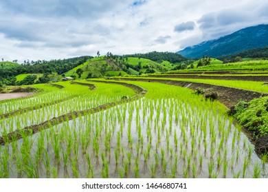 Terraced rice field in rainy season in Mae Chaem District, Chiang Mai Province, Thailand. Popular travel destination