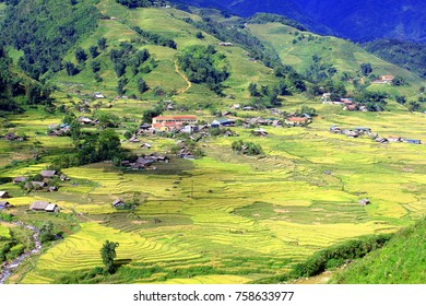 Terraced rice field in Sapa, Vietnam. The terraced rice paddy-fields in Sapa are the most beautiful ones in Vietnam