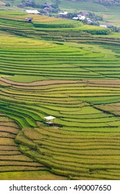Terraced rice field in rice season in Mu Cang Chai, YenBai, Vietnam, soft focus Rice fields prepare the harvest at Northwest Vietnam. beautiful landscape background