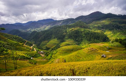 Terraced rice field at summer day in Mai Chau, Northern Vietnam.