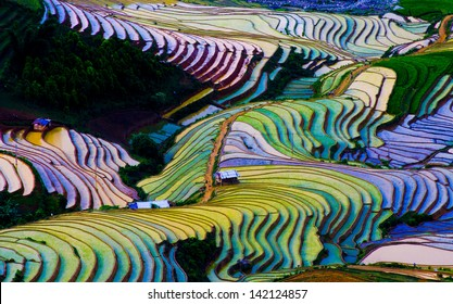 Terraced rice field in Vietnam